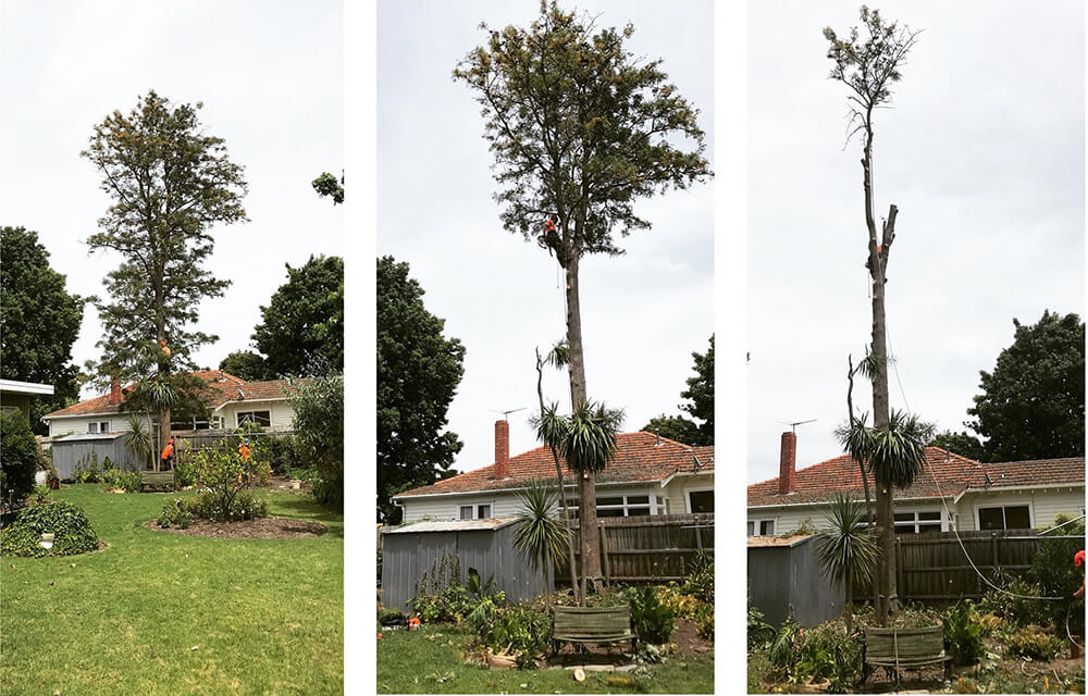 Tree Lopping & Removal Melbourne