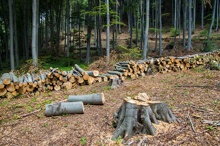 Tree Removal Property Clearing Melbourne