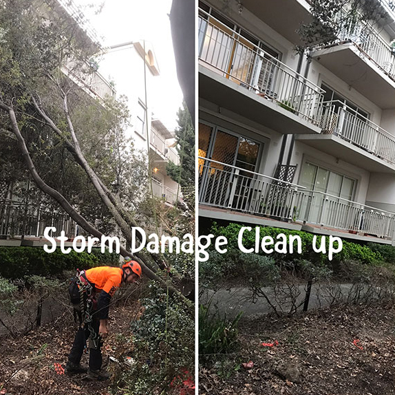 Storm Damage Tree Clean Up