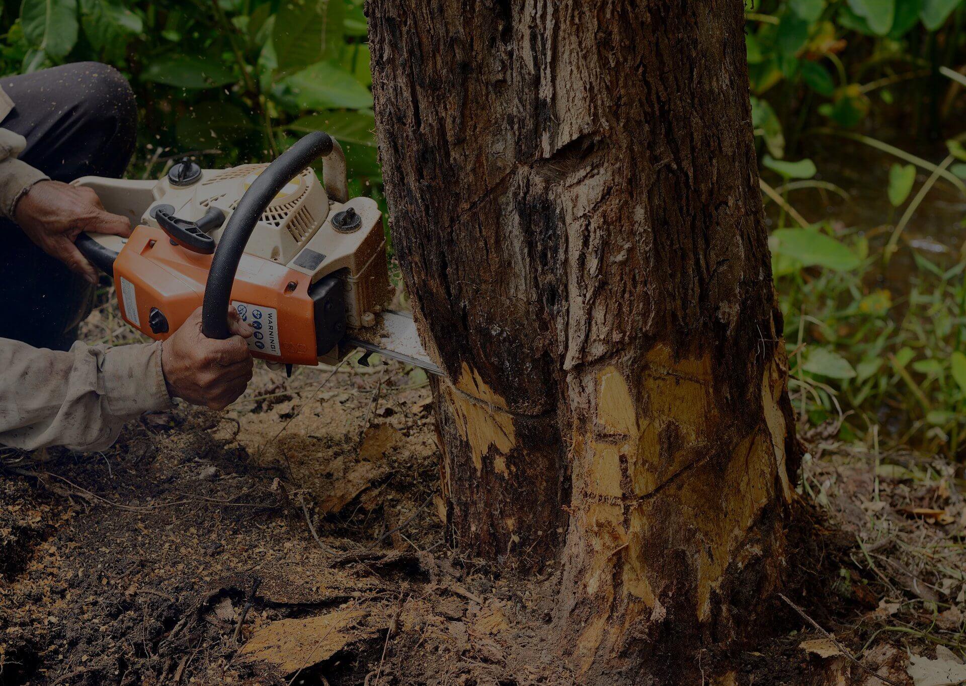 Tree Lopping Mornington Peninsula