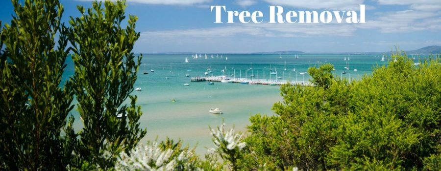 arborist mornington peninsula