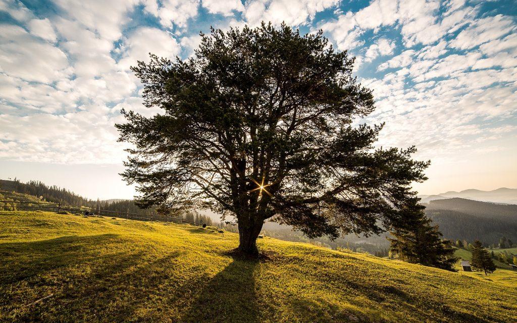 arborist mornington peninsula